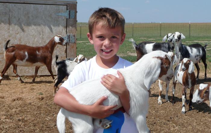 windrift hill goats